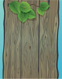 Wooden wall and green spring leaves of birch. Stock Photos