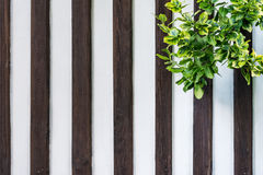 Wooden wall with ivy Royalty Free Stock Images