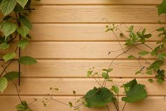 Wooden wall with ivy. Yellow wooden wall with ivy  and vinograde Royalty Free Stock Image