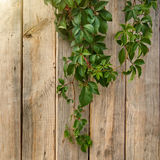 Wooden wall with leaves Royalty Free Stock Photos