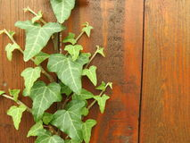 Wooden wall with plant Royalty Free Stock Image