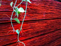 Red wooden wall with plants. Wooden wall, red wood  planks texture background with an ornamental plants stock photography