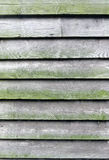 Wooden Wall. Wood wall background moldy from moisture Stock Image
