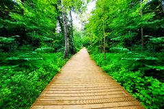 Wooden way in green forest, lush bush. Peaceful nature theme Royalty Free Stock Photo