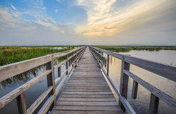 Wooden wetland walkway with sunset sky. A long and straight wooden walkway leading into a wetland in Thailand. This shot is taken at the sunset Royalty Free Stock Photo
