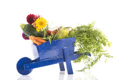 Wooden wheel barrow with vegetables. Blue wooden wheel barrow with fresh vegetables Stock Photo