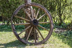 Wooden wheel of a mail coach in the green garden.  stock photo