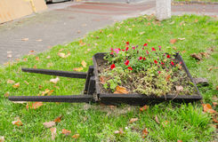 Wooden wheelbarrow with flowers Royalty Free Stock Photo