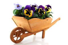 Wooden wheelbarrow with Pansies Royalty Free Stock Images
