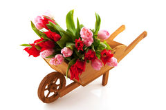 Wooden wheelbarrow with tulips Stock Photography