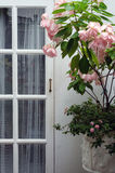 Wooden white door with pink flower Stock Photography