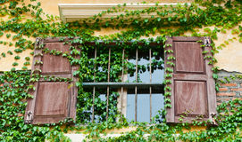 Wooden window box with climber Royalty Free Stock Photography