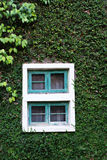 Wooden Window on the green wall Stock Images