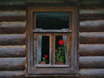 Wooden window. Window with red flowers in the house Stock Image