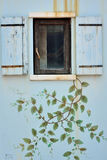 Wooden window on wall with flower Stock Photo