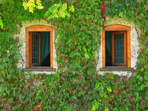 Wooden windows Stock Image