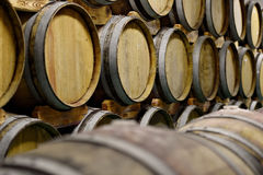 Wooden wine barrels in cellar Stock Image