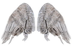Wooden wings. Two grunge wooden wings isolated on white background Stock Photo