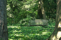 Wooden In the Woods. A depth of field shot of a wooden bench sitting in the woods, a mix of sun and shade with heartleaf foamflowers covering the ground Royalty Free Stock Images