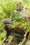 Wooden yard cart with flowers Stock Image