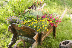Wooden yard cart with flowers Royalty Free Stock Photography