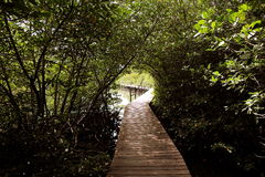 Woodenpath Royalty Free Stock Photography
