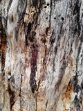 The wooder. Grey floor dry tree Royalty Free Stock Photography