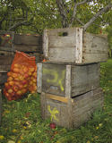 Woodern条板箱苹果 库存图片