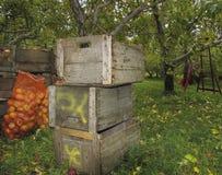 Woodern条板箱苹果 免版税库存照片