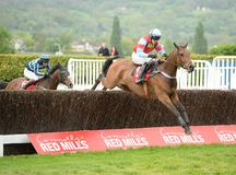 Horse Racing. Woodfleet jumps the last on his way to winning at cheltenham races 5-5-17 Royalty Free Stock Photography