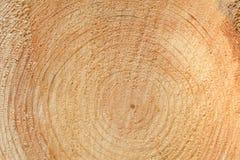 woodgrain fotos de archivo libres de regalías
