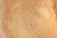 Woodgrain Royalty Free Stock Images