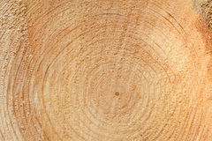 Woodgrain Royalty Free Stock Photos