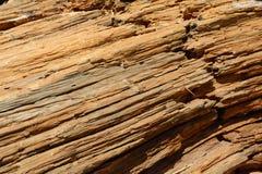 Woodgrain eines gefallenen Baums stockfotos