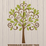 Woodgrain organic tree Stock Images