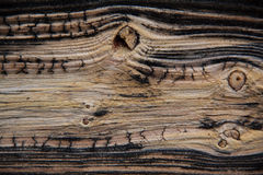 Woodgrains in aufgeteilter Schiene stockfotos