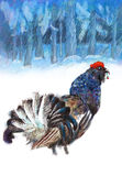 Woodgrouse Royalty Free Stock Photo
