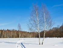 Woodlan? en invierno Fotografía de archivo libre de regalías