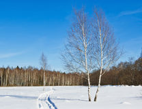 Woodlanв in winter Royalty Free Stock Photography