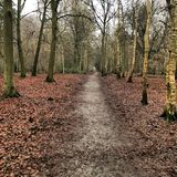 woodland fotografia stock libera da diritti