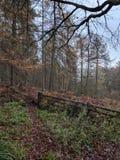 woodland images stock