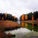woodland immagini stock libere da diritti