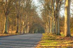 Woodland Stock Photography