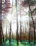 Woodland. In fabulous colors stock images