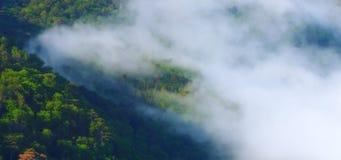 woodland Photo libre de droits