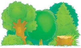 Woodland Royalty Free Stock Photo