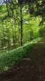 woodland Στοκ φωτογραφίες με δικαίωμα ελεύθερης χρήσης