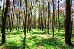 woodland στοκ εικόνες