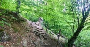 woodland Immagine Stock Libera da Diritti