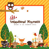 Woodland animal card Stock Photos